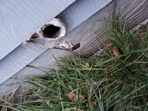 Xterminator Services job rodent entry points into your home 1