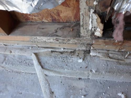Xterminator Services job Termite damage